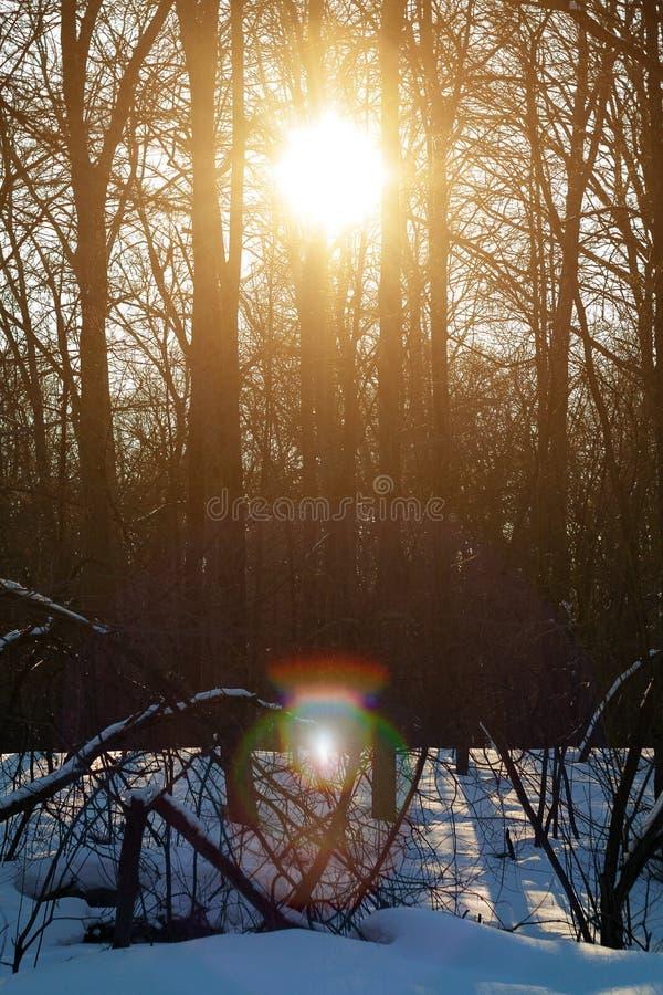 Por do sol na floresta do inverno, alargamento solar da lente através das árvores foto de stock