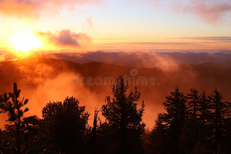 Por do sol na floresta, Oregon fotos de stock