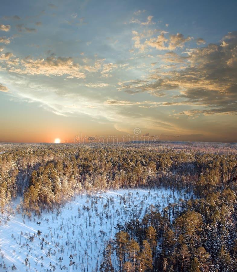 Por do sol na floresta profunda fotos de stock royalty free