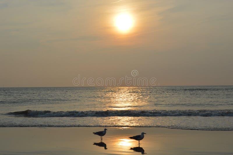 Por do sol na praia holandesa foto de stock royalty free