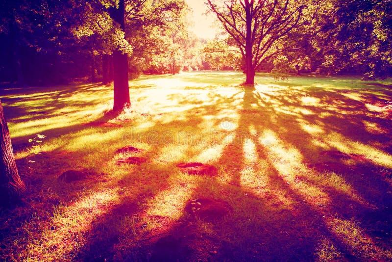 Por do sol nas madeiras imagem de stock