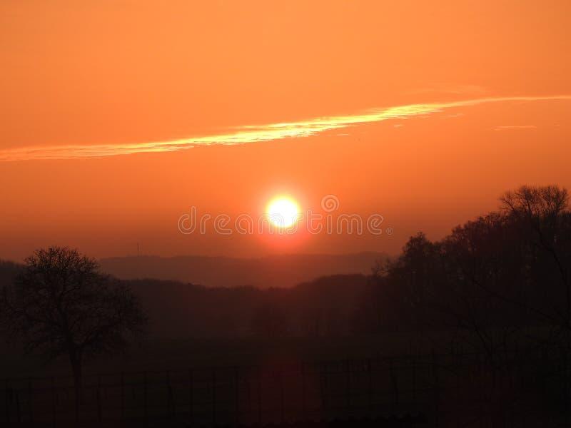 Por do sol nas madeiras, campo foto de stock royalty free