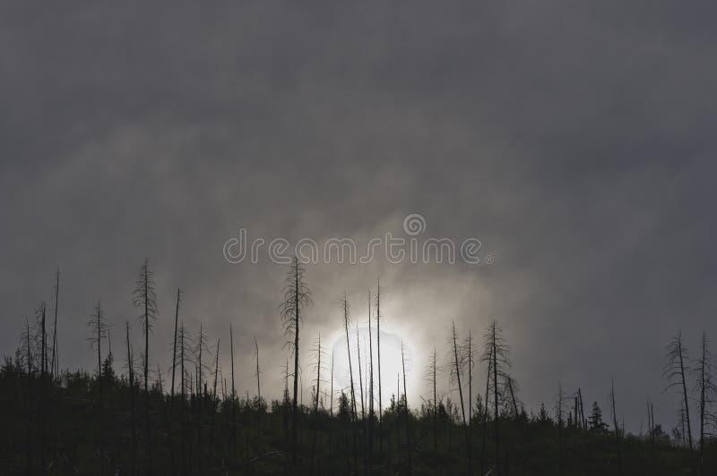 Por do sol nebuloso sobre a floresta queimada fotografia de stock