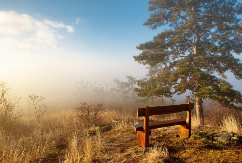 Por do sol nevoento do outono em um parque com banco de madeira fotografia de stock royalty free