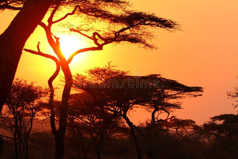Por do sol no arbusto africano foto de stock