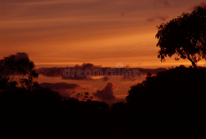 Por Do Sol No Bush Imagem de Stock Royalty Free