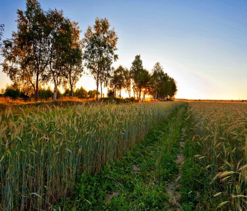 Por do sol no campo do verão imagens de stock