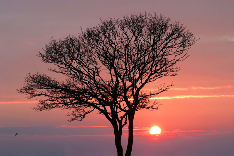 Por do sol no inverno foto de stock royalty free