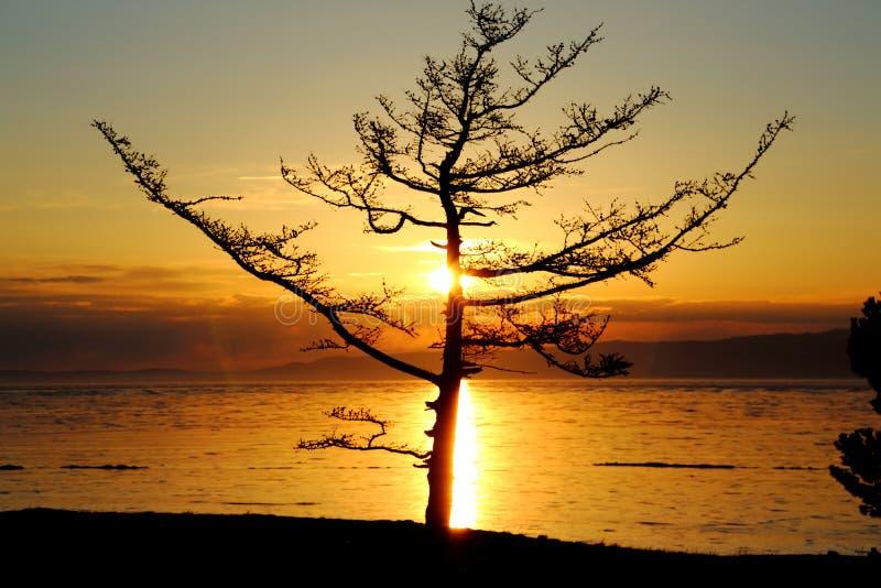 Por do sol no inverno Baikal fotos de stock royalty free
