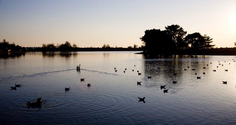 Por do sol no lago beaulieu fotografia de stock