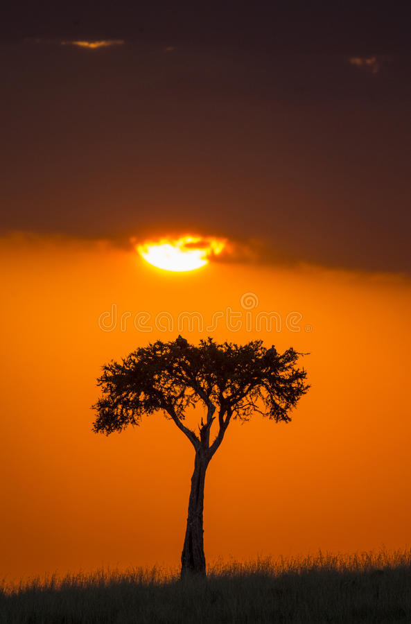 Por do sol no Maasai Mara National Park África kenya fotos de stock royalty free