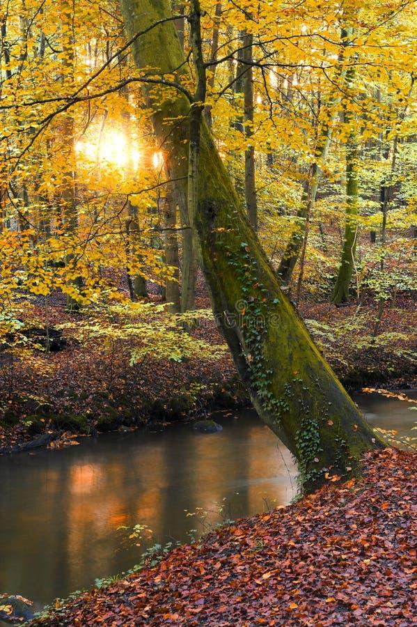 Por do sol no outono fotografia de stock