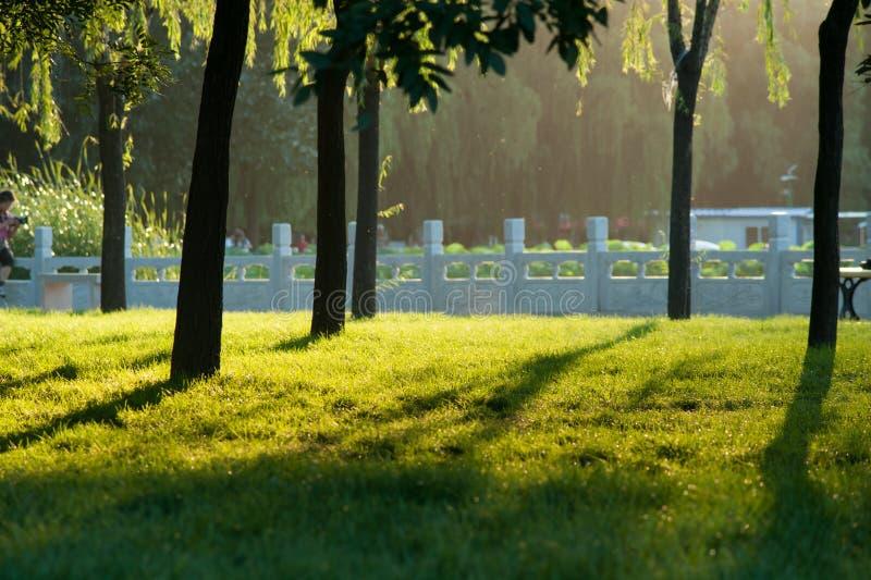 Por do sol no parque imagem de stock royalty free