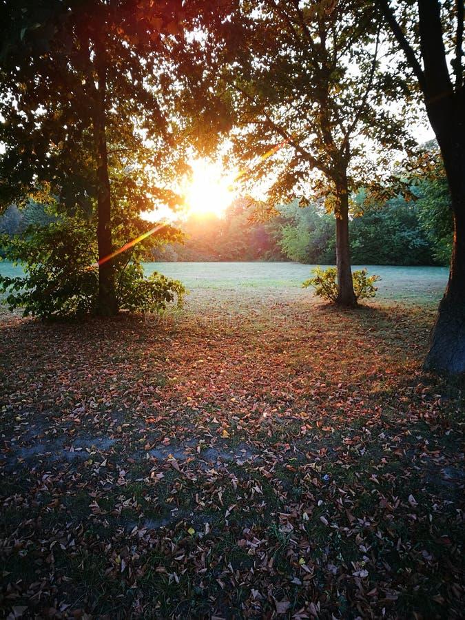 Por do sol no parque fotografia de stock