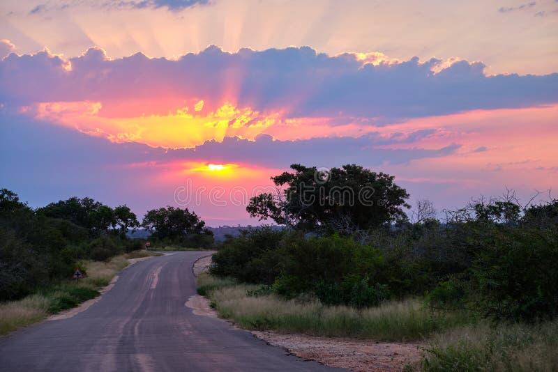 Por do sol no savana fotografia de stock royalty free