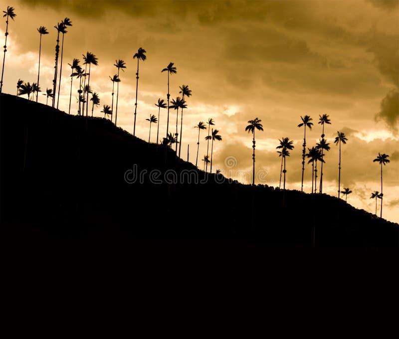 Por do sol no vale de Cocora, Colômbia imagem de stock