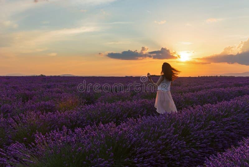 Por do sol nos campos da alfazema imagem de stock royalty free