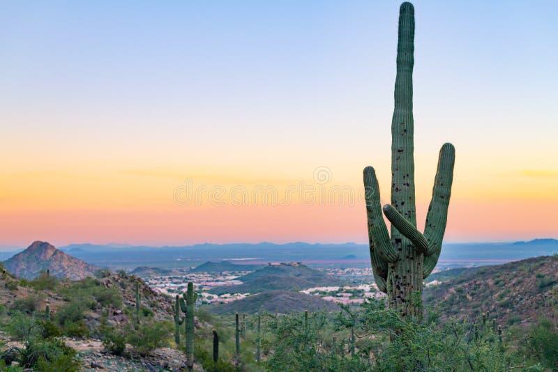Por do sol o Arizona do cacto do Saguaro fotografia de stock royalty free