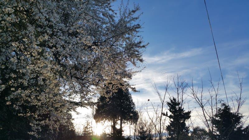 Por do sol ocidental de Seattle fotografia de stock royalty free