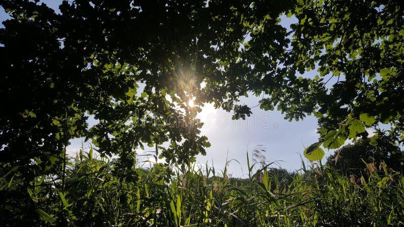 Por do sol olhado de meu quintal fotografia de stock royalty free