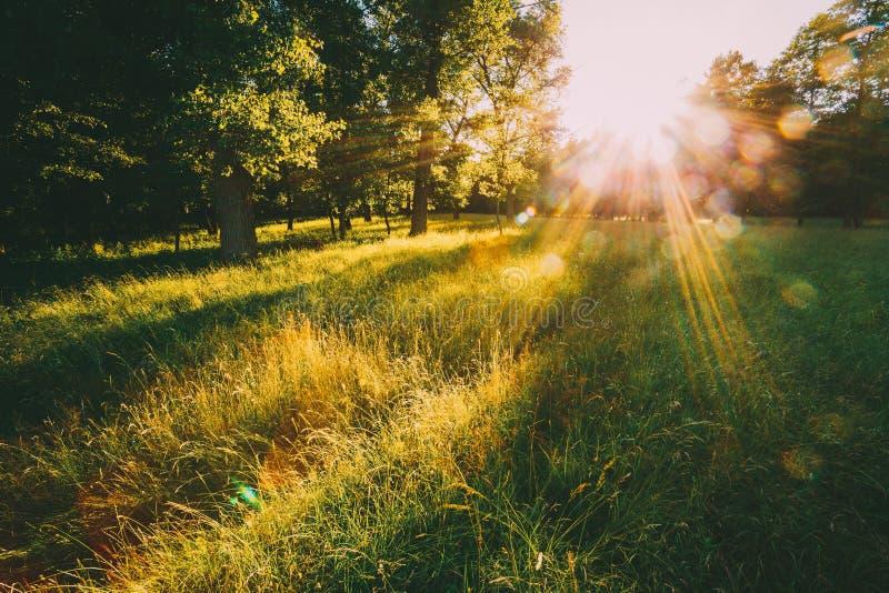 Por do sol ou nascer do sol em Forest Landscape Luz do sol de Sun com luz solar natural e raios de Sun através das árvores das ma imagens de stock