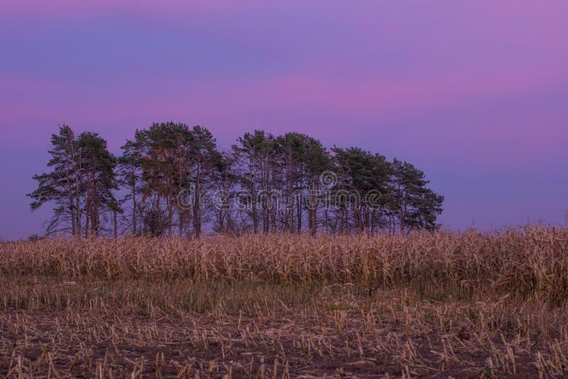 Por do sol do outono em um campo de milho imagens de stock