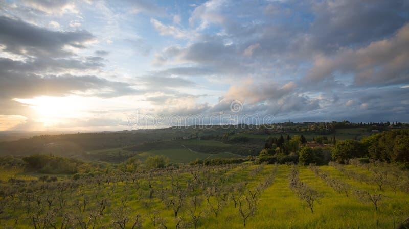 Por do sol Paisagem de Tosc?nia: montes, casas da quinta, oliveiras, ciprestes, vinhedos Os montes do Chianti ao sul de Floren?a fotografia de stock royalty free