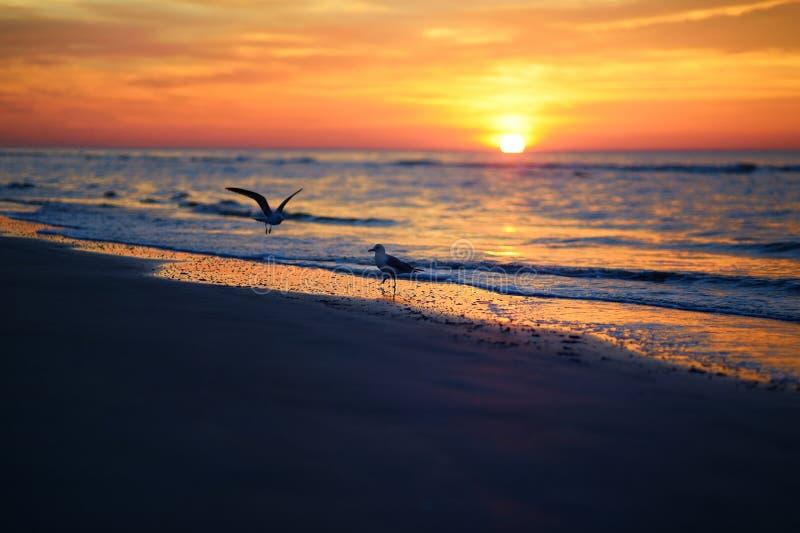 Por do sol pitoresco em uma praia imagens de stock