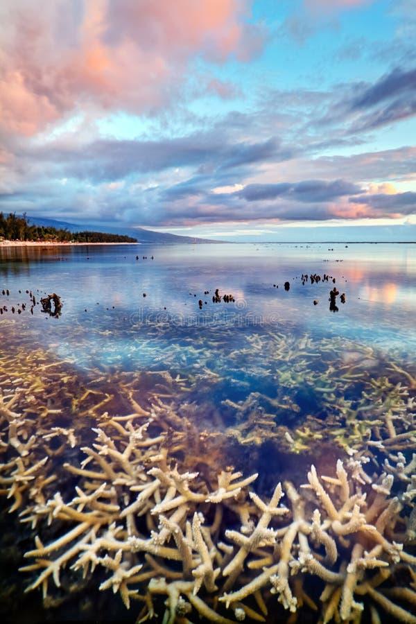Por do sol raso do recife coral imagem de stock royalty free