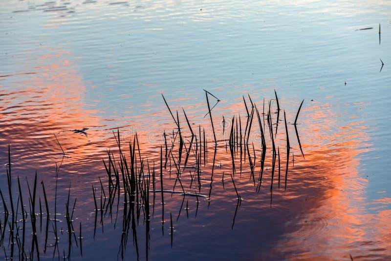 Por do sol refletido na água imagem de stock royalty free