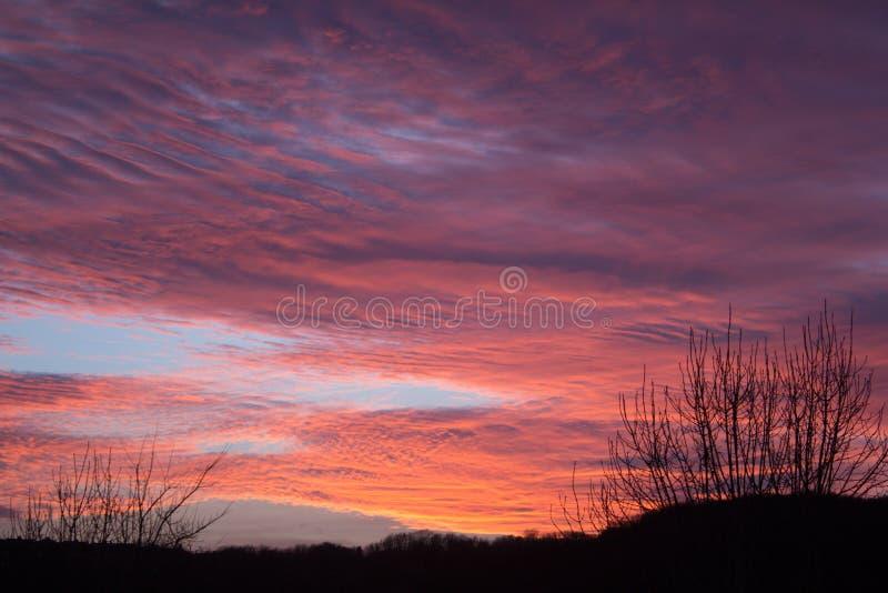 Por do sol roxo com silhueta da árvore fotografia de stock royalty free