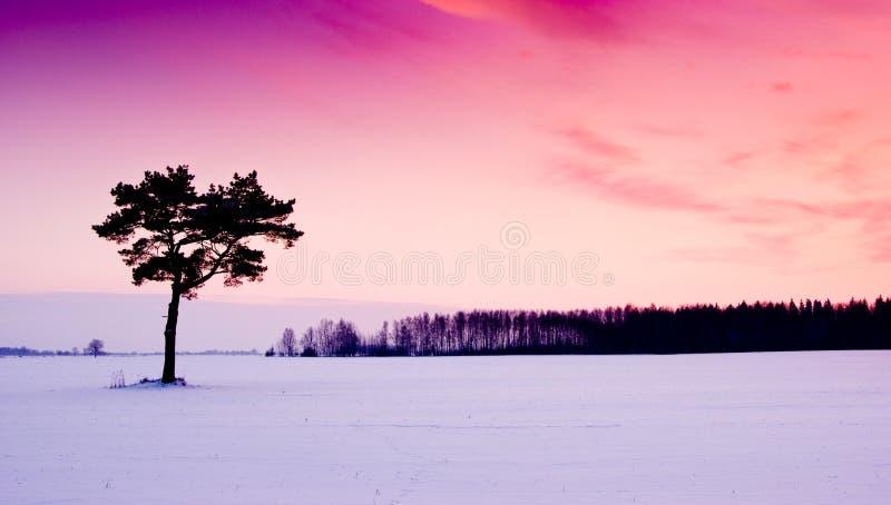 Por do sol roxo do inverno fotos de stock