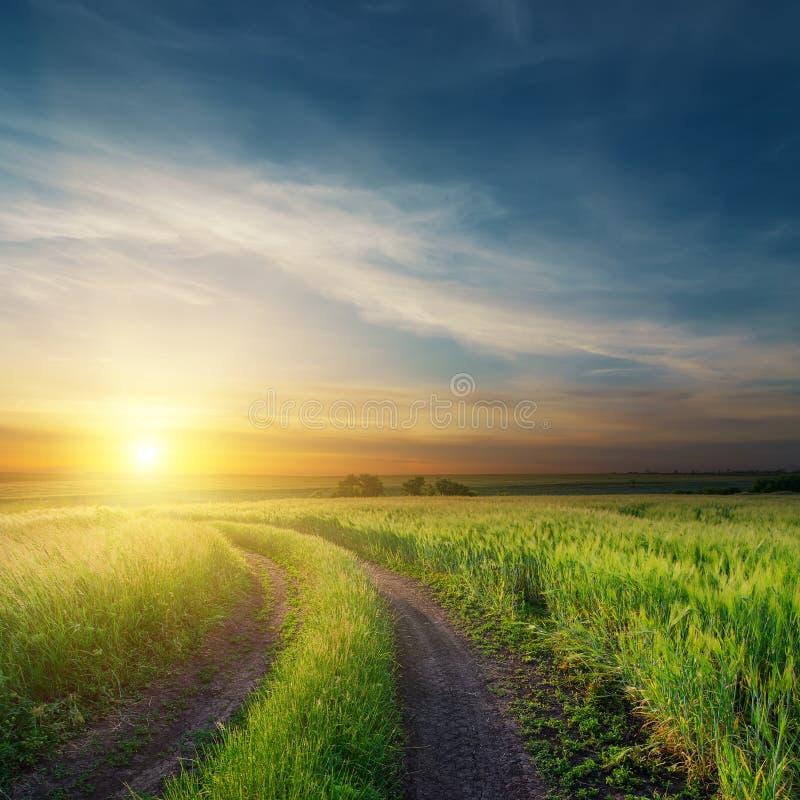 Por do sol sobre campos verdes foto de stock royalty free