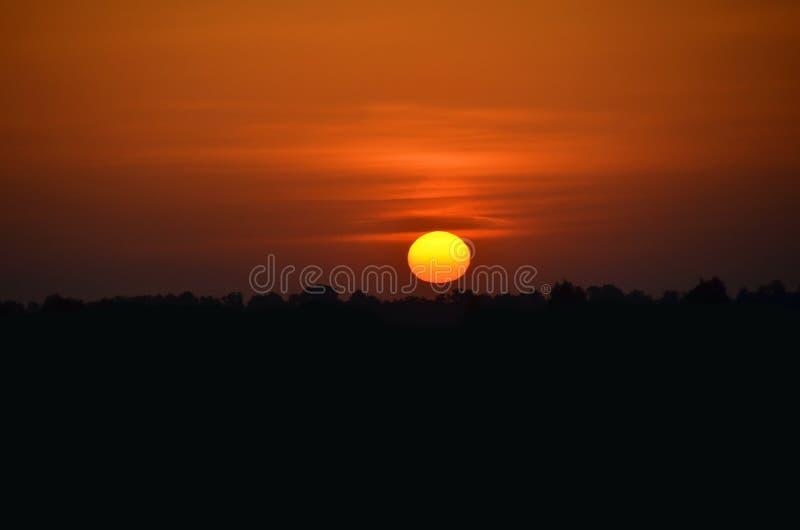 Por do sol sobre a floresta imagens de stock royalty free