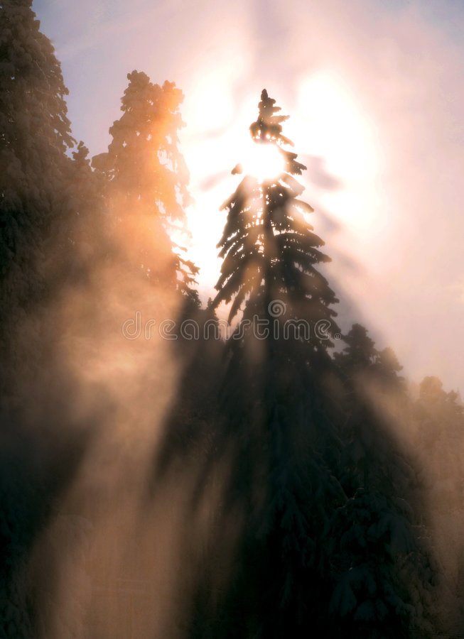 Por do sol sobre a floresta invernal imagens de stock royalty free