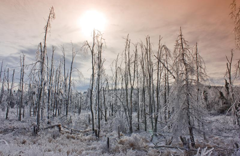 Por do sol sobre a floresta invernal foto de stock