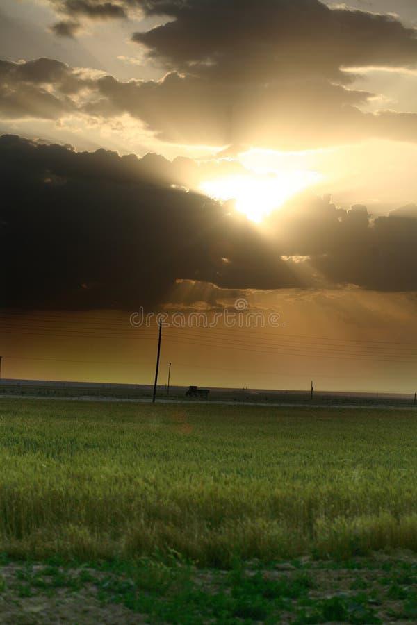 Por do sol sobre o campo com grama verde foto de stock