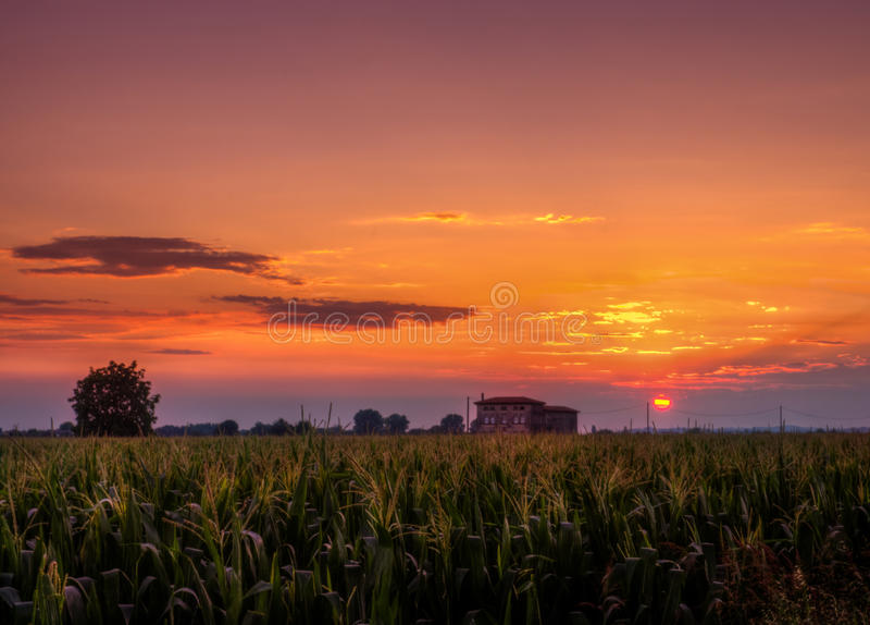 Por do sol sobre o campo de milho imagem de stock royalty free