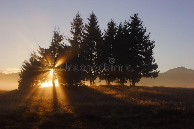 Por do sol sobre o campo de milho imagens de stock