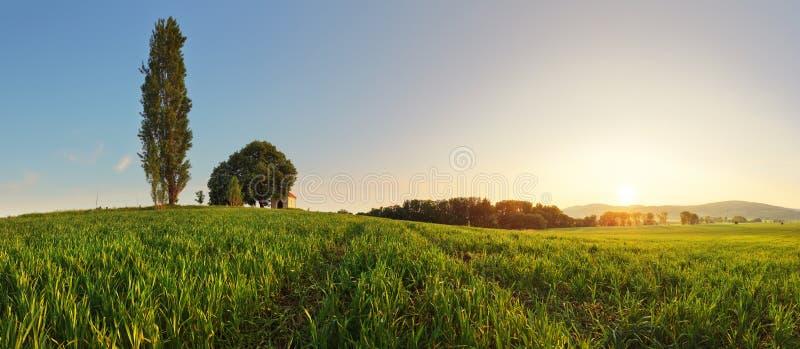 Por do sol sobre o campo de trigo verde com trajeto e a capela em Eslováquia - imagem de stock