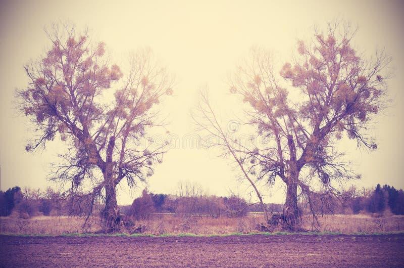 Por do sol sobre o campo, fundo retro da natureza do estilo do vintage imagem de stock