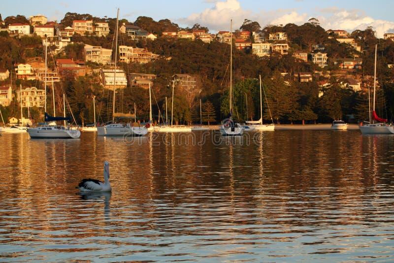 Por do sol sobre o porto em Sydney imagem de stock royalty free