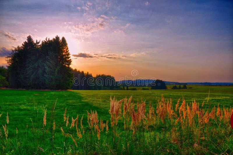 Por do sol sobre o prado e árvores spruce na noite do verão, luz solar, céu, grama verde Atmosfera de relaxamento Paisagem do cam fotografia de stock
