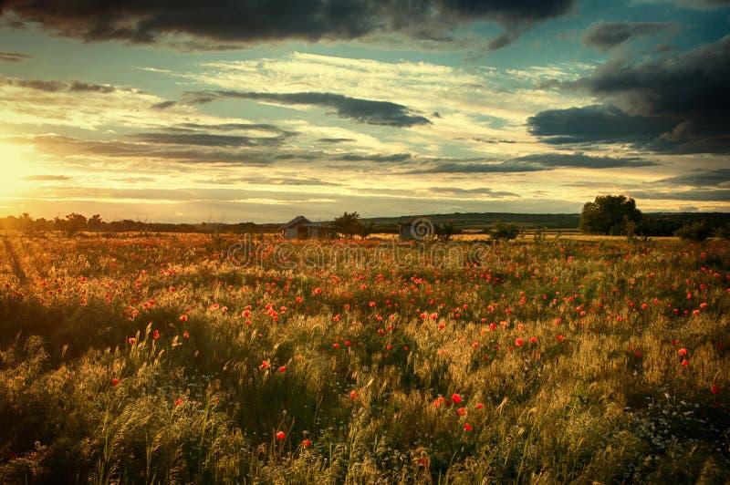 Por do sol sobre os campos que cercam Dimitrovgrad, Bulgária fotografia de stock