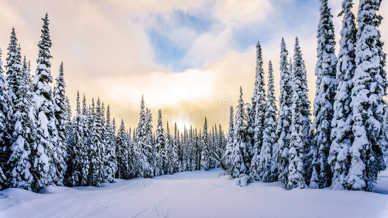 Por do sol sobre a paisagem do inverno com as árvores cobertos de neve em Ski Hills imagem de stock