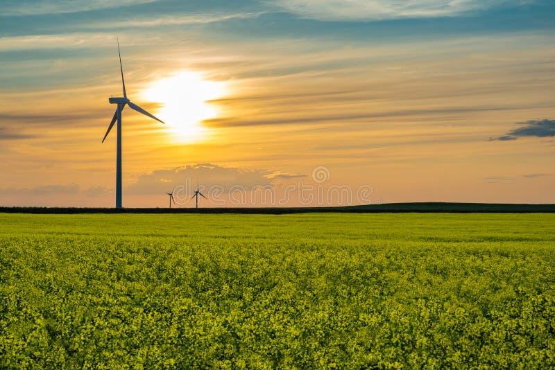 Por do sol sobre turbinas eólicas nas pradarias em Saskatchewan, Canadá fotos de stock royalty free