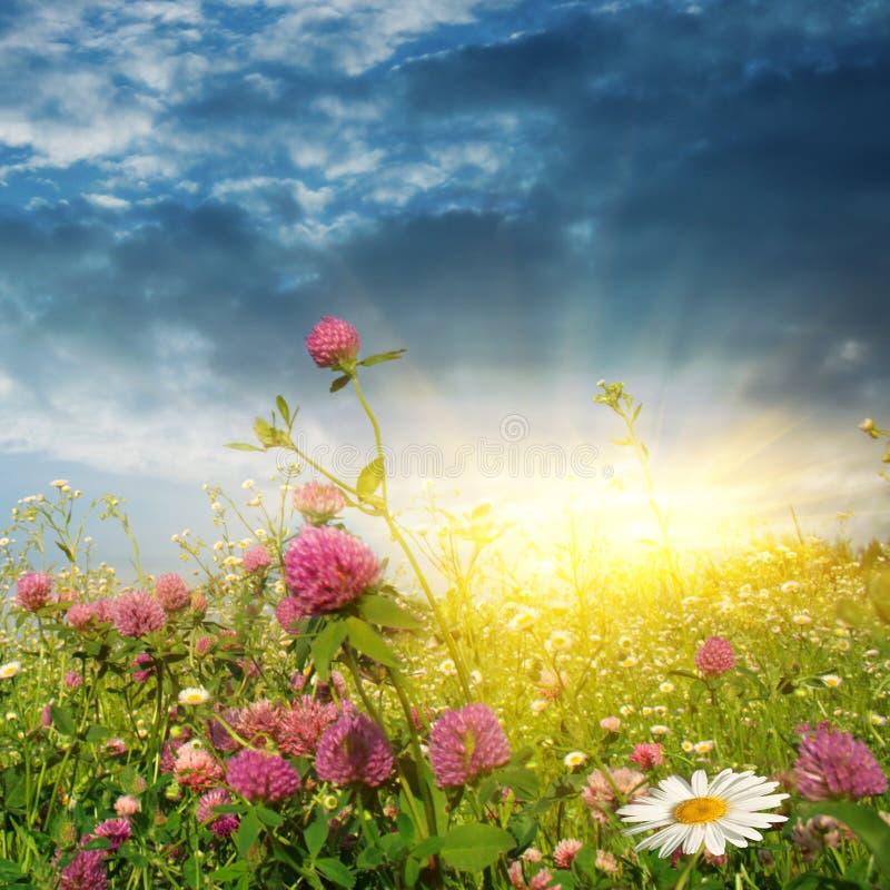 Resultado de imagem para flores do campo ao sol