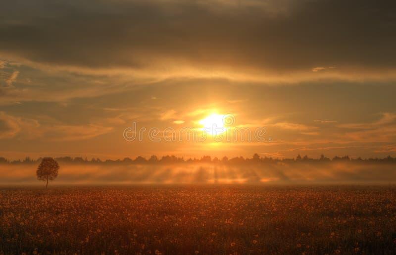 Por do sol sobre um campo dos dentes-de-leão, Rússia fotos de stock royalty free
