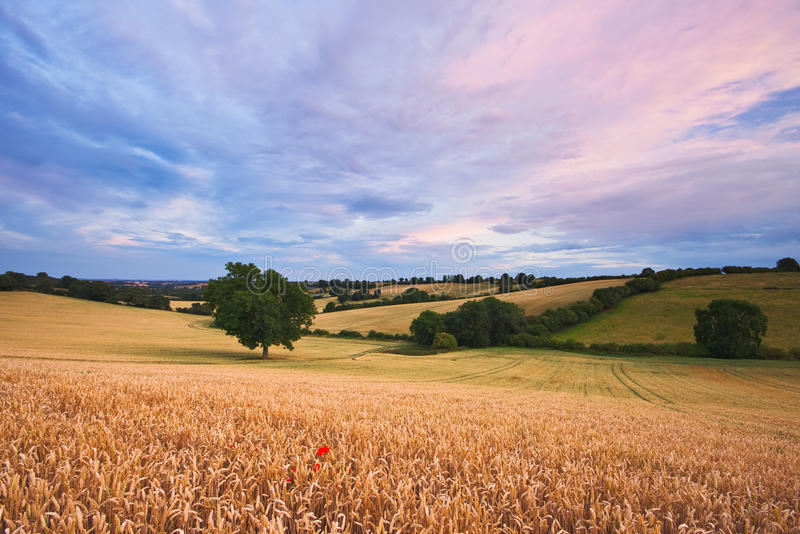 Por do sol sobre uma paisagem do verão foto de stock royalty free