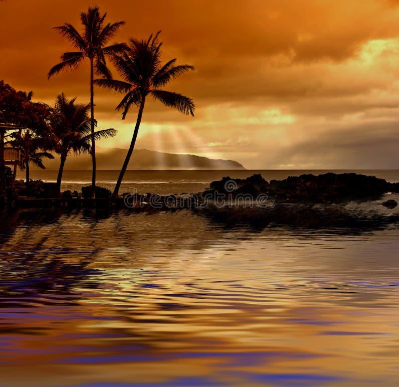 Por do sol tropical foto de stock